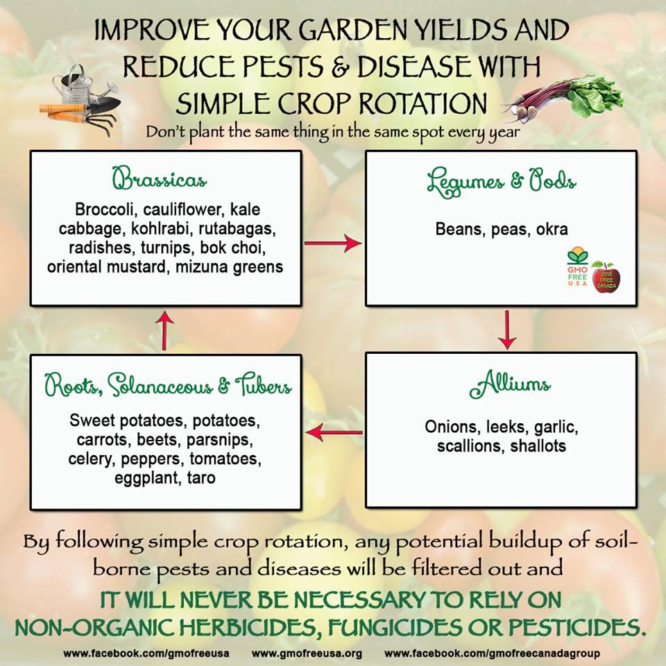 Resources Culverhouse Community Garden Schematic Crop Rotation Chart An Easy To Understand